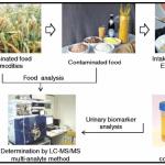 ดัชนีชี้วัดทางชีวภาพ (biomarkers) สำหรับการประเมินความเสี่ยงของการสัมผัสสารพิษจากเชื้อรา